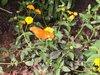 Epcot butterfly 2.jpg