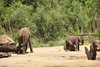 Wild Africa Trek 113.jpg