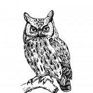 Owl X