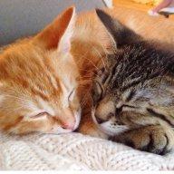 mustlovecats