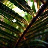 JungleTrekFan