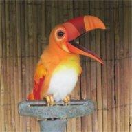 Clyde Birdbrain