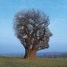 tree123