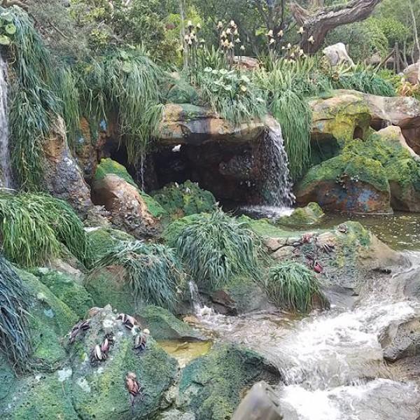 Pandora scenery