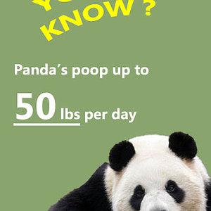 panda door.jpg